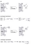Fig. 4. Reactions of ion-exchangers with calcium sulphate: